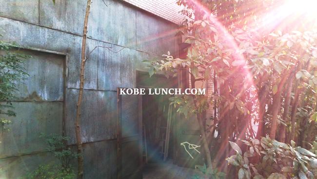 【神戸に水カフェ!?】グリーンハウスアクアは癒しの空間【三宮】