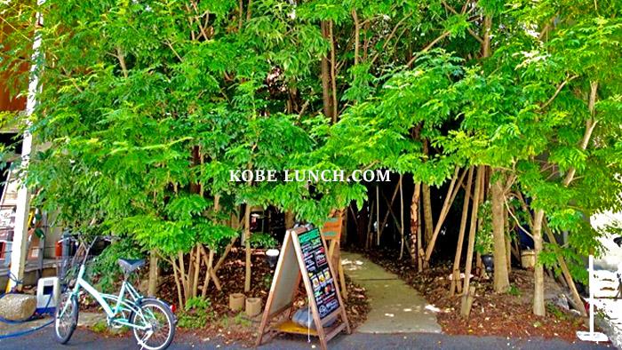 【神戸三宮に森カフェ!?】グリーンハウスシルバ 【緑に囲まれて日常に癒しを】