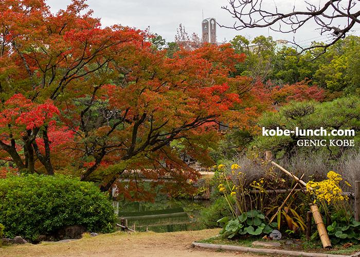 神戸でおすすめの紅葉人気スポット