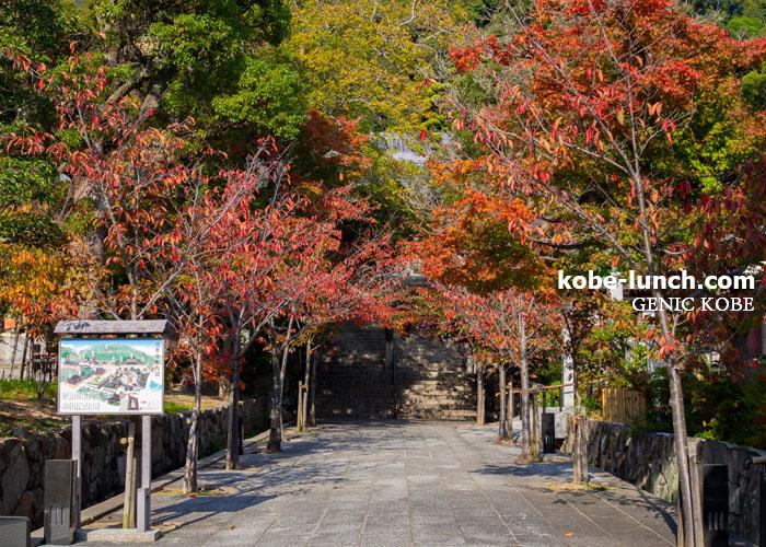 須磨寺紅葉