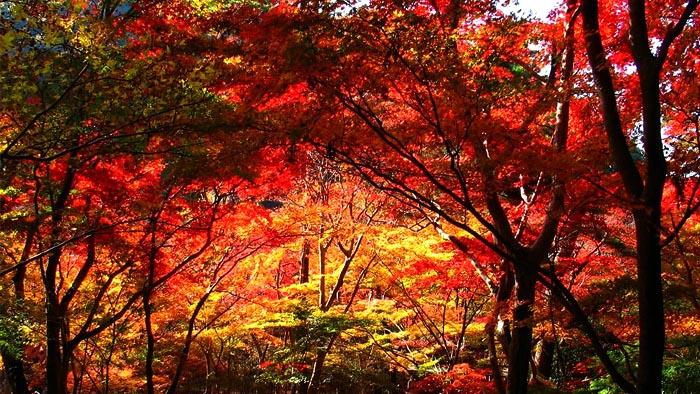 神戸の紅葉スポット