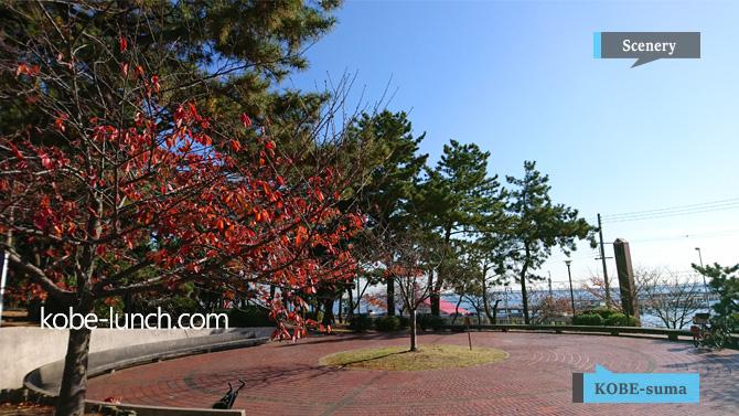 須磨浦公園 紅葉