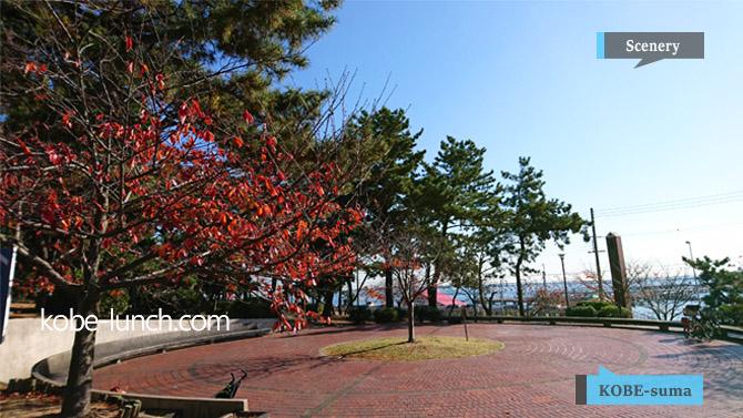 神戸 須磨浦公園 紅葉