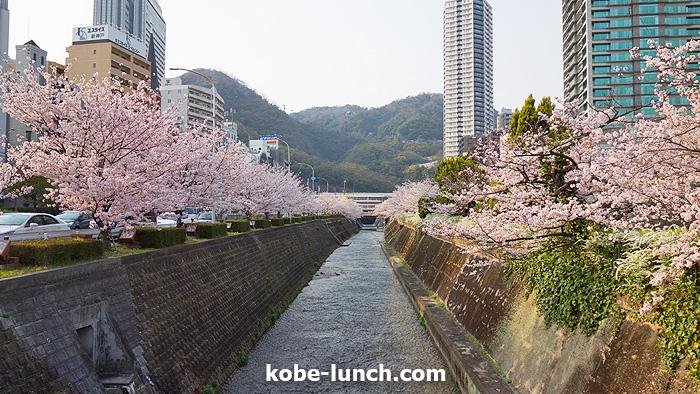 神戸三宮生田川 桜