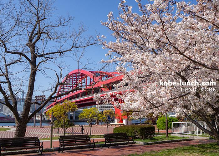 神戸大橋 桜