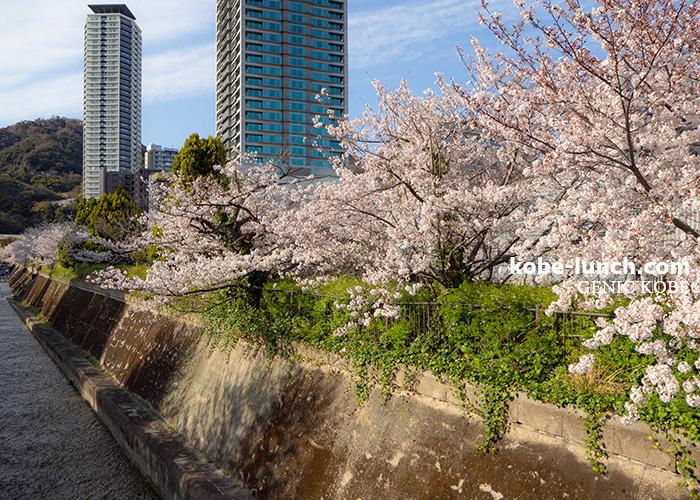 生田川公園