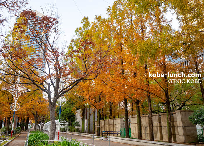 神戸市役所前・東遊園地 紅葉